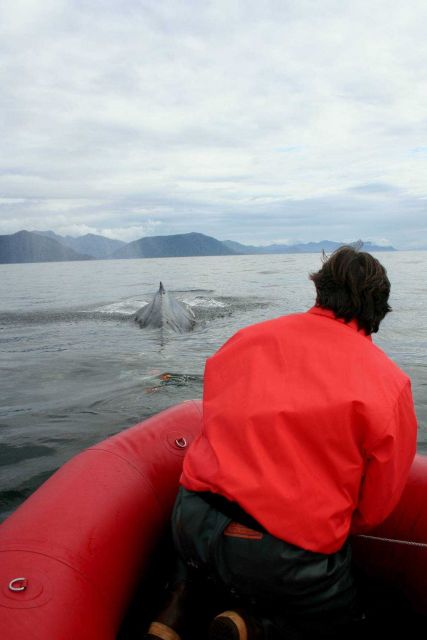 Disentanglement expert Ed Lyman prepares to attempt rescue of a satellite-tagged humpback whale entangled in gillnet. Picture