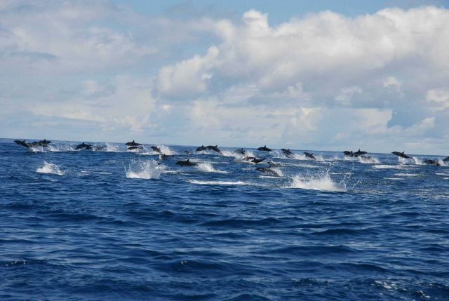 Pod of dolphin. Picture