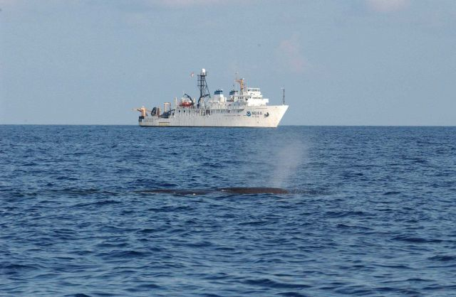 Whale blowing with NOAA Ship GORDON GUNTER in the distance. Picture