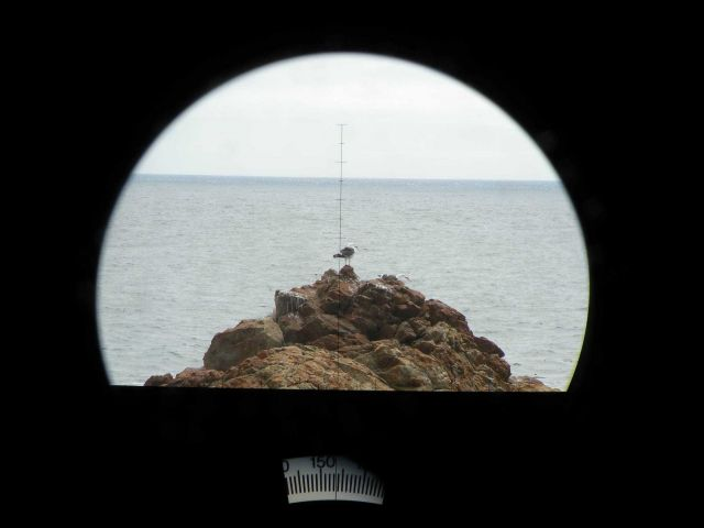 A California Gull seen through the big eye lens Picture