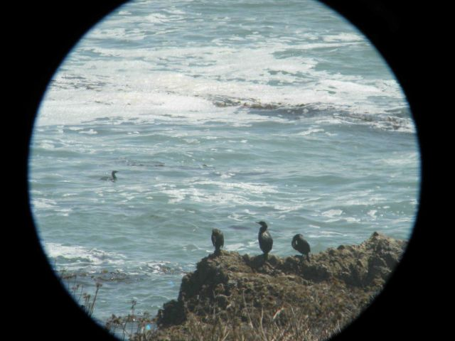 Cormorants resting on a rock Picture