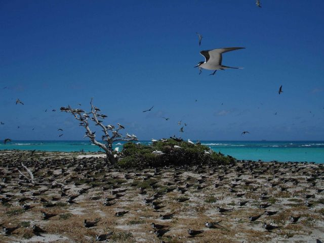 Various species of marine birds co-existing on Tern Island Picture