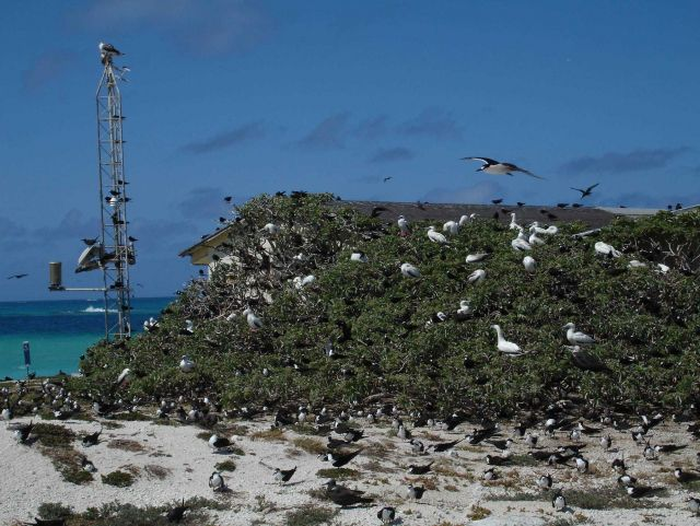 Various marine bird species. Picture