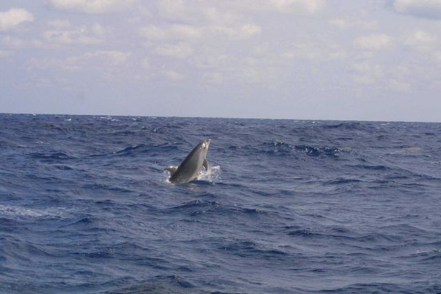 Dolphin. Picture