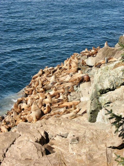 Endangered Steller sea lion Picture