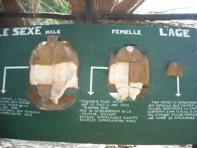 Sign providing information to determine sex of tortoise Picture