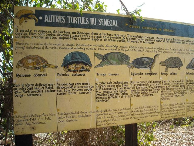 Sign depicting species of turtles found in Senegal. Picture