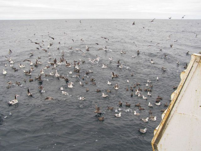 Albatross and other species Picture