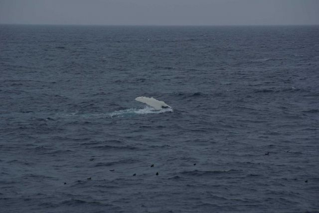 Humpback whale. Picture