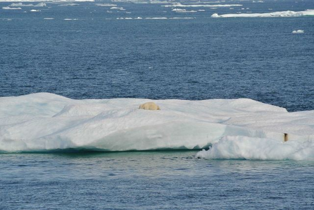 Polar bear and cub asleep on ice floe. Picture
