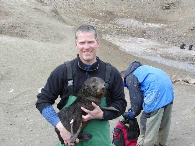 Antarctic fur seal pup Picture