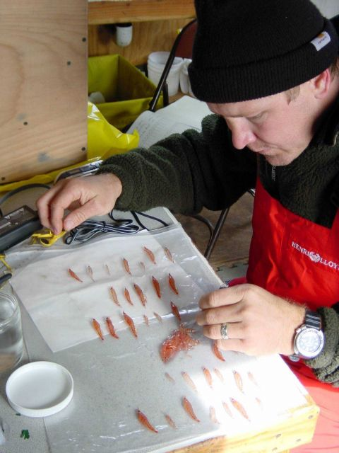 Scientist studying krill Picture