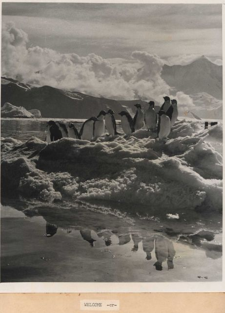 The welcome image for the report - Adelie penguins on an ice floe with their reflection in calm waters. Picture