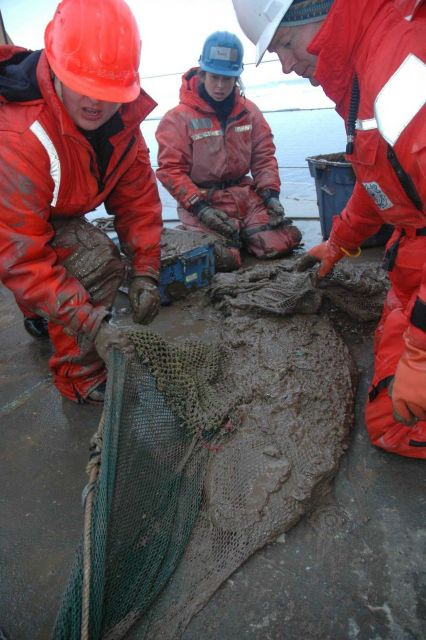 Muddy scientists checking out the bottom trawl net for creatures. Picture