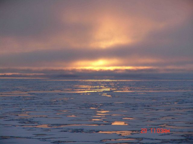 The golden Arctic with sun reflecting off what appears to be a field of first year ice floes. Picture
