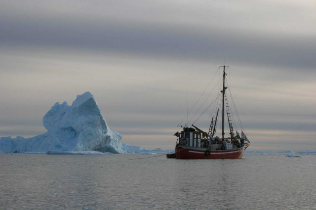 MV Sila in the ice on an expedition to the narwhal summering grounds in Melville Bay, West Greenland Picture