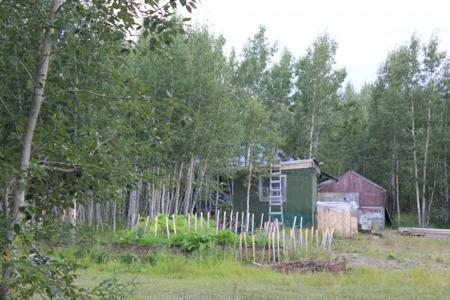 A home and garden at Talkeetna, the Gateway to Mt Picture