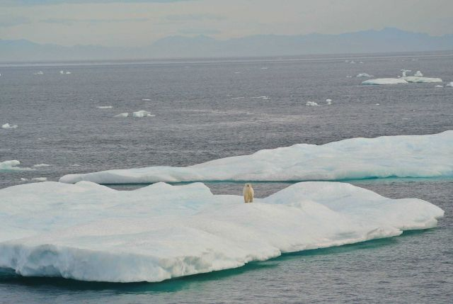 Ice floe with polar bear in Beaufort Sea. Picture