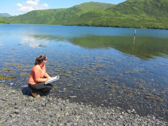 NOAA Teacher at Sea Dana Bradley reading tide staff at Japanese Bay Picture
