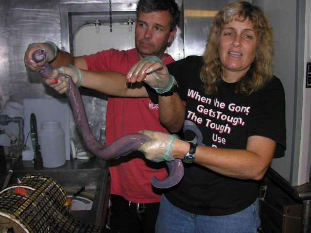 Scientists Justin Marshall and Tammy Frank holding one of the
