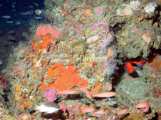 A soldierfish (Corniger sp.) peering out from under a ledge. Picture
