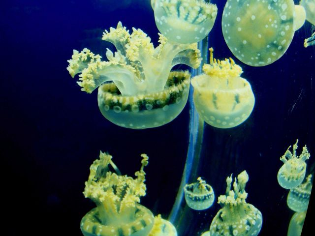 Jellyfish - explore an aquarium to see some of the wonders of the sea. Picture