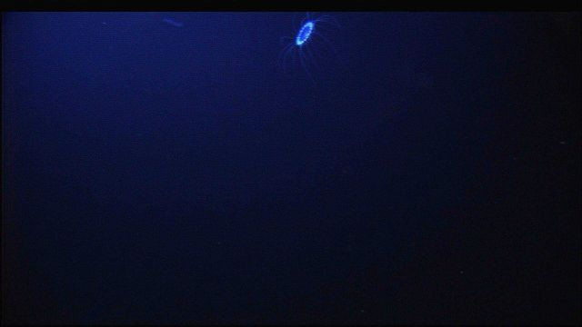 A lone bioluminescent jellyfish seen in the inky blackness of the abyss Picture