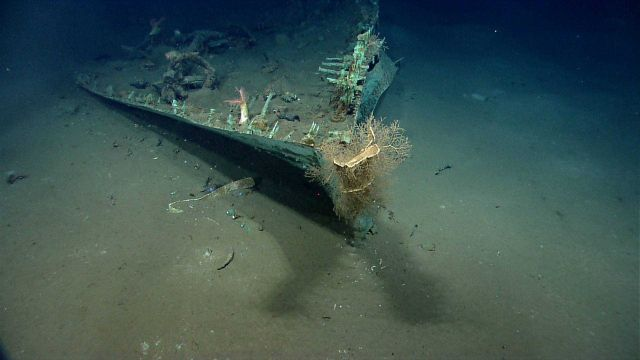 Artifacts from Monterrey A shipwreck.Hydroids growing on bow where copper sheathing appears to have been lost. Picture