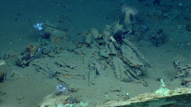 Artifacts from Monterrey A shipwreck Picture