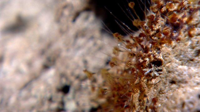 A colony of hydroids Picture