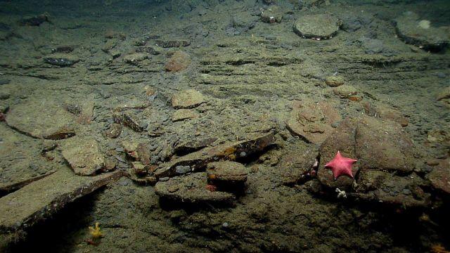Sea star. Picture