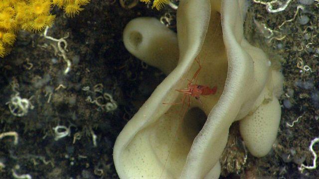 Deep sea sponge. Picture