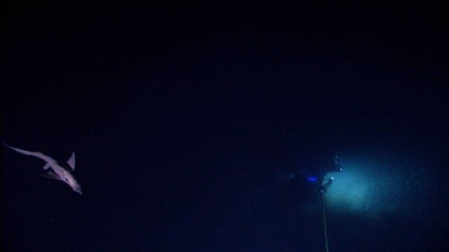 A chimaera cruises close to Serios while Deep Discoverer can be seen below. Picture