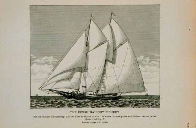 Halibut schooner in summer rig Two topmasts up and all sails spread Drawing by Capt Picture
