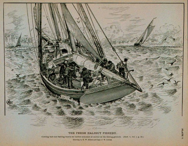 Cutting bait and baiting trawls on halibut schooner at anchor On the fishing grounds Drawing by H Picture