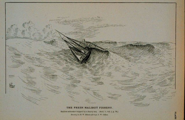 Halibut schooner tripped by a heavy sea Drawing by H Picture