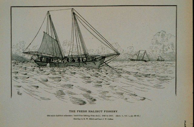 Old-style halibut schooner, hand-line fishing from deck, 1840 to 1850 Drawing by H Picture