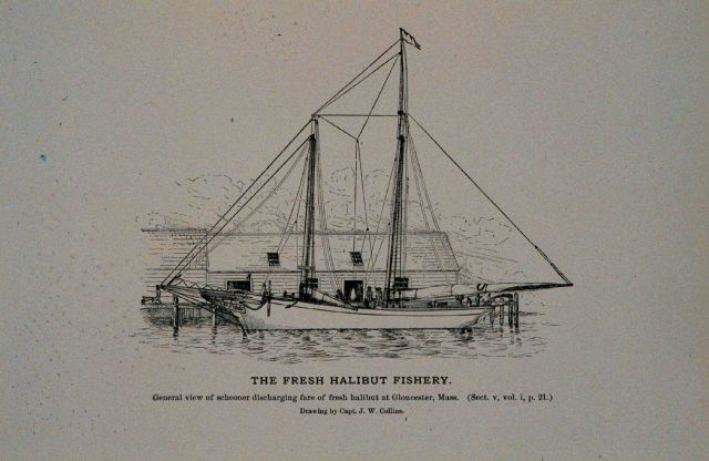 General view of schooner discharging fare of fresh halibut at Gloucester, Mass Drawing by Capt Picture