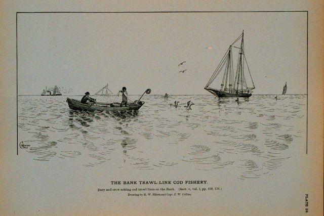 Dory and crew setting cod trawls on the Bank Drawing by H Picture