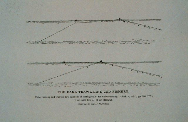 Underrunning cod trawls; two methods of setting trawl for underrunning Drawing by Capt Picture