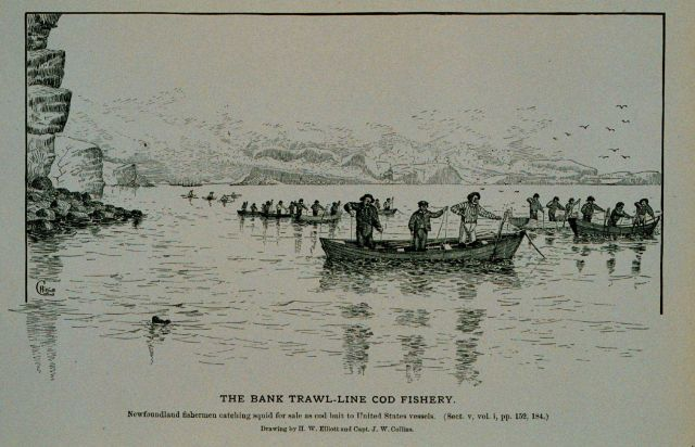 Newfoundland fishermen catching squid for sale as cod bait Sold to United States vessels Drawing by H Picture