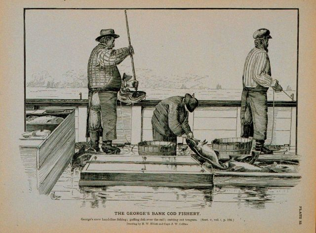 George's Bank crew hand-line fishing Gaffing fish over the rail; cutting out tongues Drawing by H Picture