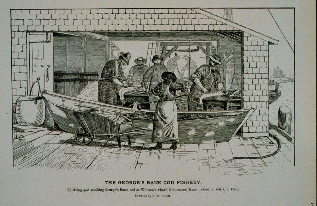 Splitting and washing George's Bank cod at Wonson's wharf, Gloucester, Mass Picture