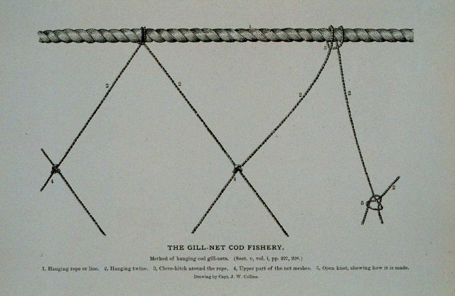 Method of hanging cod gill-nets in Norway From Bulletin U.S Picture