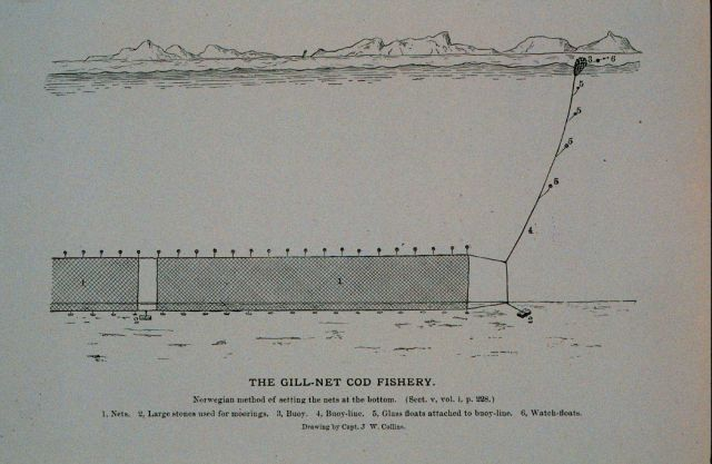 Norwegian method of setting gill-nets at bottom From Bulletin U.S Picture