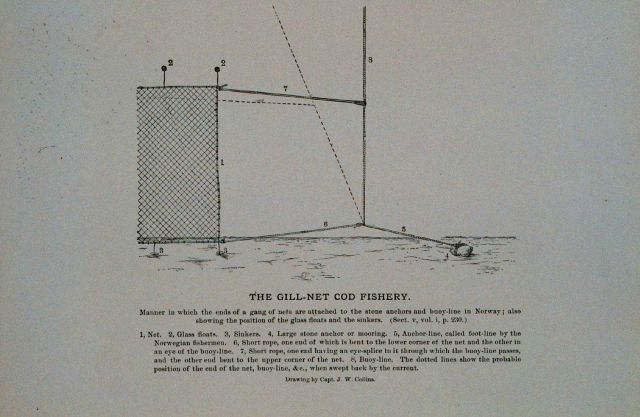 Attaching stone anchors and buoy lines to end of gangs of nets Norwegian method From Bulletin U.S Picture
