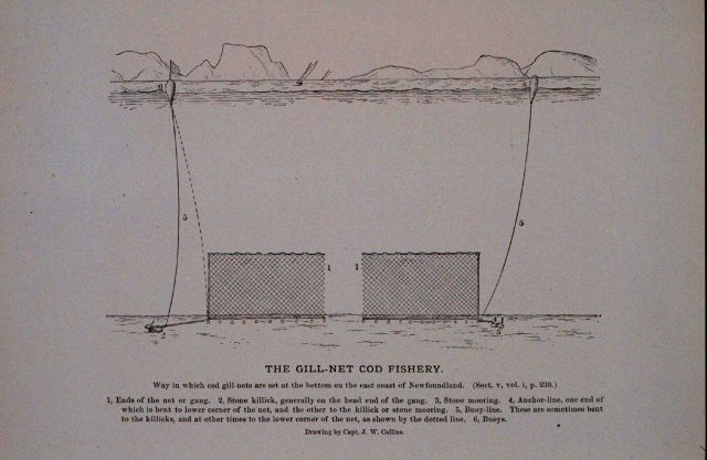 Way in which cod gill-nets are set at the bottom On the east coast of Newfoundland From Bulletin U.S Picture