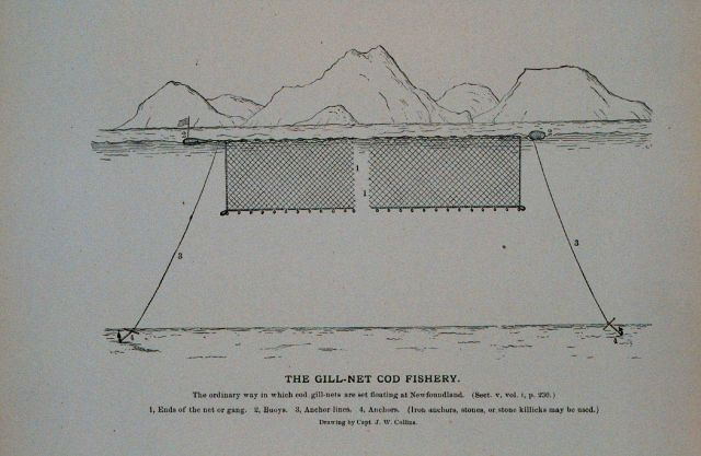The ordinary way in which cod gill-nets are set floating at Newfoundland From Bulletin U.S Picture