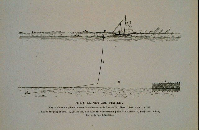 Way in which cod gill-nets are set for underrunning In Ipswich Bay, Massachusetts From Bulletin U.S Picture
