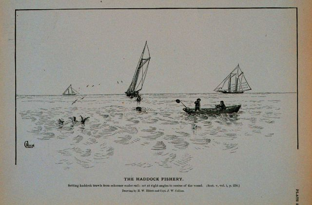 Setting haddock trawls from schooner under sail; Set at right angles to course of the vessel Drawing by H Picture